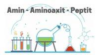 Chuyên đề Amin - Amino Axit - Protein - Trắc nghiệm có lời giải